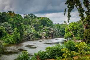 Ntem river flowing through the rainforest, Campo, Southernの写真素材 [FYI02342085]