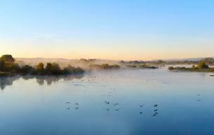 Sunrise, gray geese, Altmuhlsee at Muhr am Seeの写真素材 [FYI02342130]