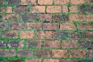 Way of brick, covered with grass, structure, detailの写真素材 [FYI02342181]