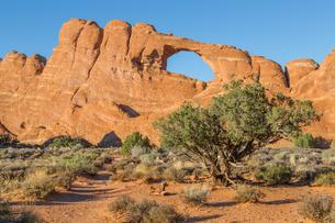 Skyline Arch, natural arch rock formation, Arches Nationalの写真素材 [FYI02342252]
