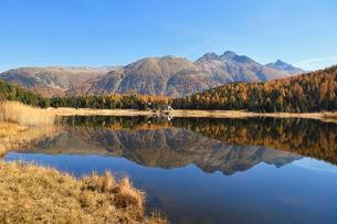 Autumnally coloured larch forest reflected in Lakeの写真素材 [FYI02342320]