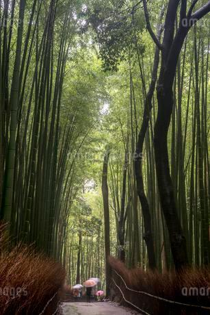 Strollers in the rain, bamboo forest of Arashiyama, Kyotoの写真素材 [FYI02342381]
