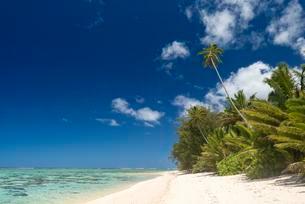 Sandy beach with palm trees and turquoise water, Rarotongaの写真素材 [FYI02342403]