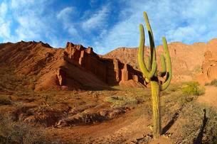 Cactus (Echinopsis atacamensis) in front of red rocks inの写真素材 [FYI02342451]