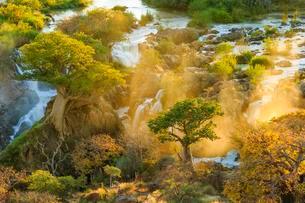 Epupa Falls at Sunrise, Kunene Region, Namibia, Africaの写真素材 [FYI02342461]
