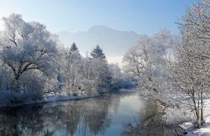 Trees with hoarfrost on the shore, Loisach, near Kochel amの写真素材 [FYI02342475]