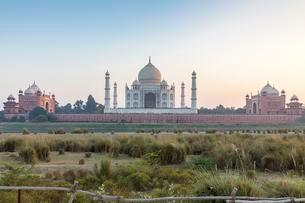 Taj Mahal, Agra, Uttar Pradesh, India, Asiaの写真素材 [FYI02342483]