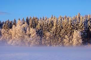 Snowy forest edge in the morning light, Geretsried, Upperの写真素材 [FYI02342538]