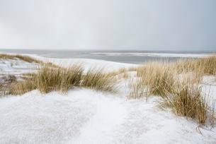 Dunes with beach grass on snow, North Sea, Langeoog, Eastの写真素材 [FYI02342592]