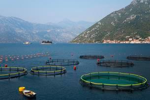 Fish farming, Bay of Kotor, Montenegro, Europeの写真素材 [FYI02342598]