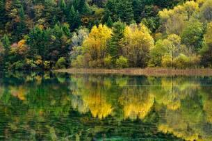 Five Flower Lake in autumnal environment, Jiuzhaigouの写真素材 [FYI02342606]