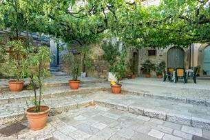 Pergola with grape vines in an alley, Old Town, Triventoの写真素材 [FYI02342617]