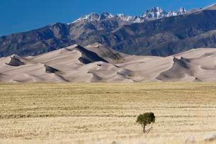 Single tree, behind the Sangre de Cristo Mountains, Greatの写真素材 [FYI02342654]