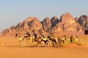 Bedouins with Camel Caravane at Wadi Rum, Jordan, Asiaの写真素材 [FYI02342664]
