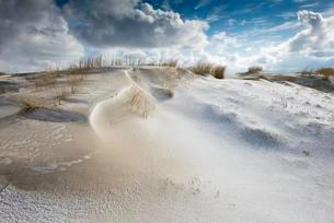 Dunes with beach grass and snow, North Sea, Langeoog, Eastの写真素材 [FYI02342670]