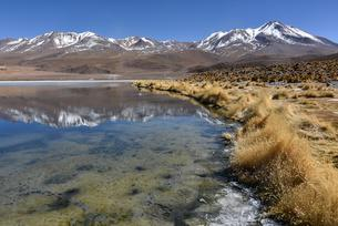 Laguna Canapa, Upper Andes, Altiplano, Potosi, Uyuniの写真素材 [FYI02342682]