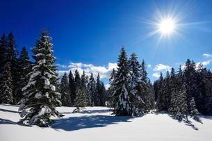 Snowy winter landscape, Winklmoos-Alm, Reit im Winklの写真素材 [FYI02342795]