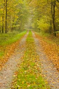 Forest track in the autumn, Lower Saxony, Germany, Europeの写真素材 [FYI02342819]