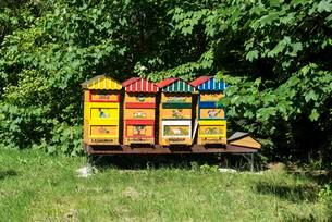 Coloured painted beehives, Eriskircher Ried, Eriskirchの写真素材 [FYI02342824]