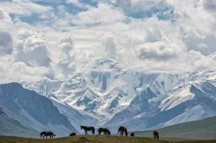 Horses grazing in front of Tien Shan snow-capped mountainsの写真素材 [FYI02342838]