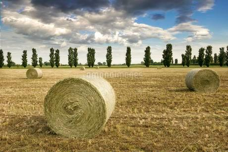 Hay bales on harvested field, rear avenue, Emiglia-Romagnaの写真素材 [FYI02342843]