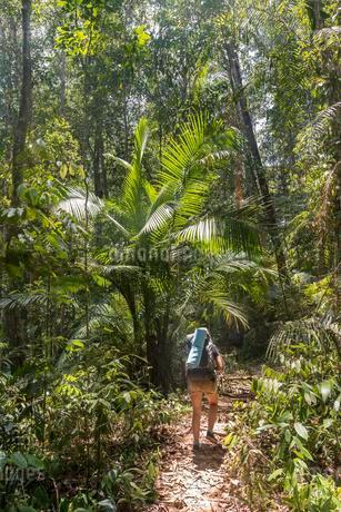 Hiker, young woman walking along a trail in the jungleの写真素材 [FYI02342849]