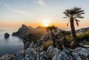 Sunrise, palm in front of Cap Formentor, Port de Pollencaの写真素材 [FYI02342920]