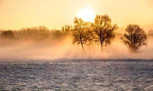 Morning winter landscape, Schildow, Brandenburg, Germanyの写真素材 [FYI02342994]