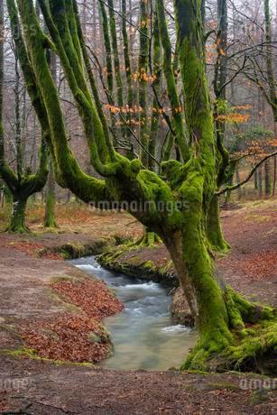 Gorbea Natural Park, Parque natural de Gorbea, Gorbeiaの写真素材 [FYI02343042]