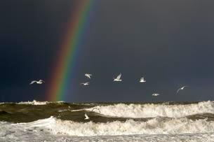 Stormy sea with rainbow, dark clouds and flying seagullsの写真素材 [FYI02343048]