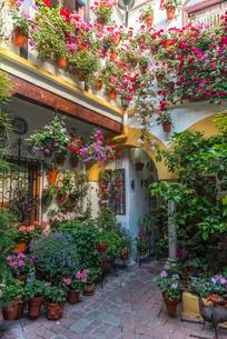 Many colorful flowers in flower pots on a house wall in theの写真素材 [FYI02343054]