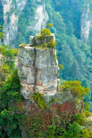 Tianzishan mountain with vertical rock columns of quartzの写真素材 [FYI02343062]