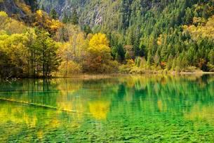 Five Flower Lake in autumnal environment, Jiuzhaigouの写真素材 [FYI02343105]