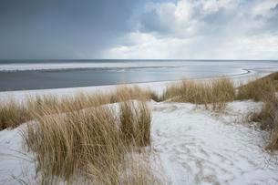 Dunes with beach grass on snow, North Sea, Langeoog, Eastの写真素材 [FYI02343106]