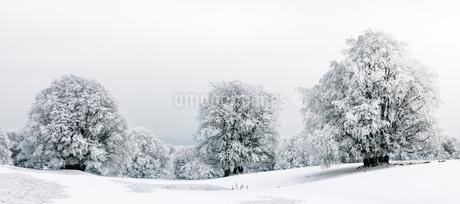 Winter landscpae, frozen trees in winter, Mont Saleveの写真素材 [FYI02343127]