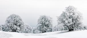 Winter landscpae, frozen trees in winter, Mont Saleveの写真素材 [FYI02343127]