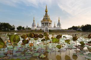 Pond with Lotus (Nelumbo) in front of Maha Rattana Chedi ofの写真素材 [FYI02343180]