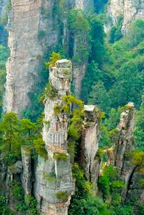 Tianzishan mountain with vertical rock columns of quartzの写真素材 [FYI02343194]