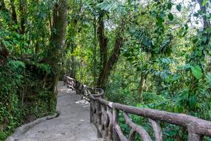 Hiking Trail, Rainforest, Mistico Arenal Hanging Bridgesの写真素材 [FYI02343235]