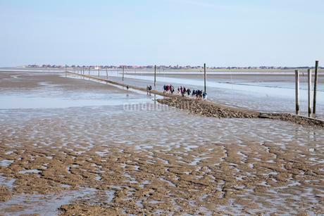 Hiking group in the wadden sea, behind Baltrum islandの写真素材 [FYI02343257]