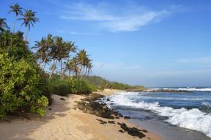 Palms at sandy beach with surf, Indian Ocean, Mirissaの写真素材 [FYI02343276]