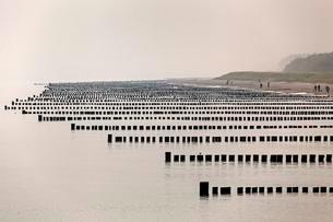 Groynes, one behind the other, Baltic Sea beach nearの写真素材 [FYI02343283]