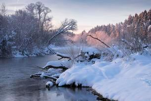 Winter morning, Isar river, Pupplinger Au, Geretsriedの写真素材 [FYI02343286]