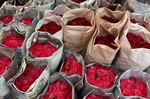 Roses, wrapped in newsprint, for sale, Pak Khlong Talatの写真素材 [FYI02343288]