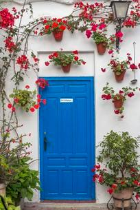 Blue door with red geraniums in flowerpots on a house wallの写真素材 [FYI02343313]