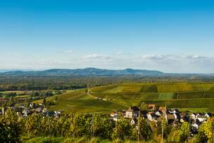 Small village in the vineyards, Ebringen, Markgraflerlandの写真素材 [FYI02343329]