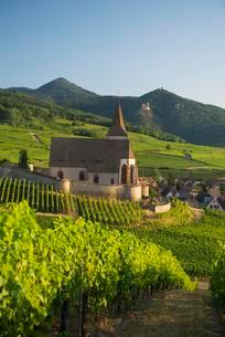 Church within the vineyards, Gothic fortified church ofの写真素材 [FYI02343336]