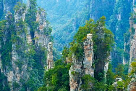 Tianzishan mountain with vertical rock columns of quartzの写真素材 [FYI02343389]