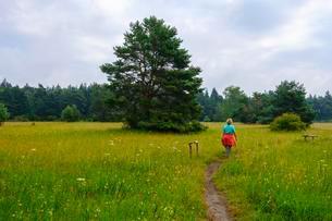 Female hiker in Konigsbrunner Heide, Augsburg, Swabiaの写真素材 [FYI02343454]