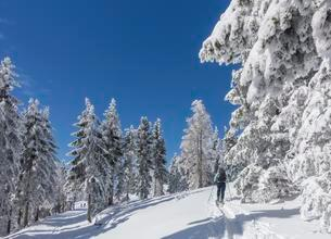 Ski mountaineer and snow-covered trees at Unterberg, Lowerの写真素材 [FYI02343465]